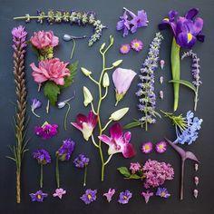 Arranjos florais de Emily Blincoe (8 fotos)