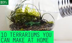 10 Terrariums You Can Make at Home