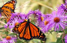 Attract butterflies to your landscape with a raised butterfly island bed. We show you everything you need to know to complete this project in one day.