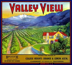 VALLEY VIEW Orange crate label Claremont orchards by LABELSTONE,