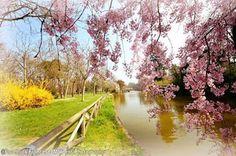 Bologna, Primavera ai Giardini Margherita, foto di Francesco Malpensi Photography