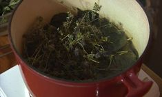 rftzgzz How To Dry Basil, Herbs, Vegetables, Thierry, Health, Bio, Young Living Congestion, Herbal Plants, Lavender