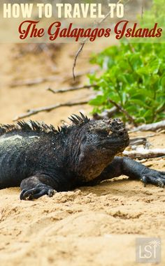 The Galapagos Islands are one of the last great wildernesses of our world. Discover some Galapagos Island facts, and how you can travel there - everything from visas to flights, Galapagos tours.