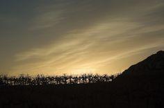 Vinos mexicanos y vinicolas de Mexico: Visitamos la zona vinicola de Queretaro