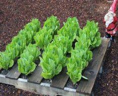 Pallet Gardening Ideas #Pallet_Gardening #Pallet_Garden #Pallet Outdoor Gardening Ideas - http://dunway.info/pallets/index.html