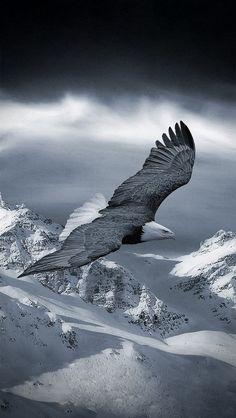 """""""On An Eagle Wings ~ You Can Achieve All Things."""""""