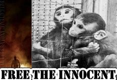 Free the Innocent