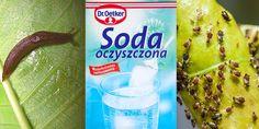 Poniżej przedstawimy Wam najpopularniejsze zastosowania sody oczyszczonej w ogrodzie. Malaga, Halle, Food, Detox, Meal, Eten, Meals
