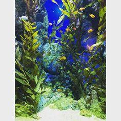 【cuoc.song.gian.don】さんのInstagramをピンしています。 《#顏色 #魚 #新加坡 #照片 #fish #新加坡#海 #sea #green》