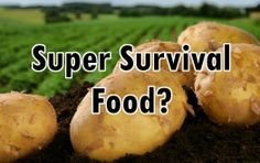 potatoe superfood 263x166 How Potatoes can Help you Survive Food Shortages and Boost Your Health