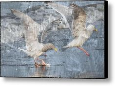 Seagulls Canvas Print / Canvas Art  #seagulls #birds #beach #ocean #feathers #wings #art