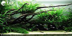 Nature Aquascape by Jirapong Laopiyasakul