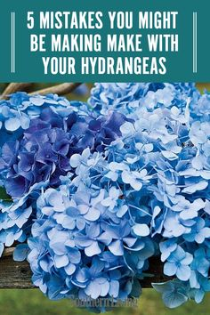 There are a few ways to go wrong with your hydrangea care. We've rounded up a few of the most common mistakes that can leave your hydrangeas with bare, woody stems and no blooms. Avoid these errors and your hydrangeas will be flourishing in no time. Hydrangea Garden, Hydrangea Flower, Hydrangea Landscaping, Hydrangea Varieties, Climbing Hydrangea, Hydrangea Not Blooming, Blooming Plants, Cactus Flower, Flower Beds