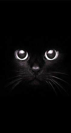 Black Cat Art Print by Maioriz Home Cat Wallpaper, Black Wallpaper, Wallpaper Backgrounds, Animals Beautiful, Cute Animals, Fluffy Animals, Halloween Greetings, Big Photo, Crazy Cats