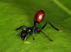 http://www.berkeley.edu/news/media/releases/2008/01/ants-vid.shtml