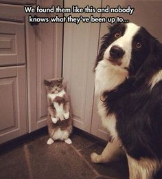 That cat is very triggered. That dog is scared, thinking that the cat is seizuring.
