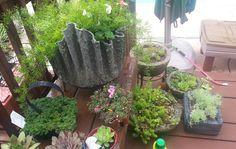 Video: Final Result of My Draped Hypertufa Planters