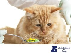 TIPS PARA MASCOTAS: No le administres medicamentos a tu mascota sin pr...
