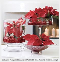 poinsettia centerpiece- simple and lovely.