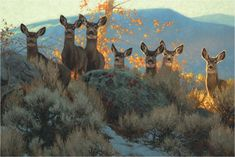 Wilderness in Winter: Wildlife Paintings By Greg Beecham Wildlife Paintings, Wildlife Art, Animal Paintings, Animal Drawings, Deer Paintings, Deer Photos, Deer Pictures, Snowy Pictures, Wild Life