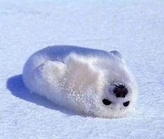 Random guy: It looks like a blob! How cute!!! Seal: Excuse me minster but i'm soooo not cute