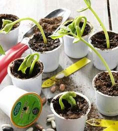 Reduce, reuse, recycle!! Reuse your plastic k cups from your Keurig coffee, and use them for seed starters!! Great idea!!