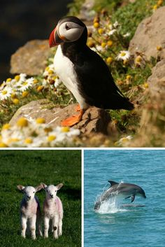 Some of the wildlife we can expect to see in West Wales this Spring. Can't wait! <3