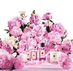 Peony Blush Fragrance Collection by Jo Malone (Bild: Jo Malone)