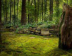 Grow a Moss Garden - Planted Space