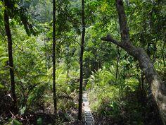 """Foto door: Jolanda Zandbergen """"In de jungle op Borneo waar we mee werkten aan een project om kinderen op te vangen. We gingen natuurlijk met begeleiding de jungle in , wel spannend"""""""