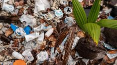 Plastic cups and bottles with a sprouting coconut, Direction Island. Plastic Items, Plastic Cups, Cocos Island, Sea Containers, Plastic Pollution, Australia Day, Plastic Waste, Recycling Bins, Small Island