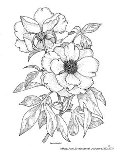 Image result for peony flower cling stamps