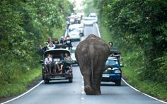 This elephant must have thought he was on a trunk road as he walked between cars - and created a long line of traffic. The male Asian elephant held up vehicles for around an hour as he made his way along the long road in Khao Yai National Park, in Thailand.