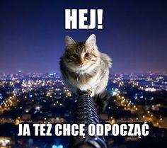 #memy #kot