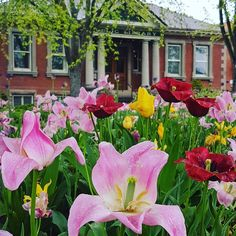 Beauty really is all around us. Even on a rainy Saturday morning on our way to the Lindsay Farmers Market. #lindsay #Kawarthas #canada #spring #scenic #love #lovewhereyoulive #flower #flowermagic #flowerslovers #library #history #rain #colour #saturday #pink @weathernetwork @ontariotravel @natgeotravel http://gelinshop.com/ipost/1523972604766339624/?code=BUmPQJ6hkIo