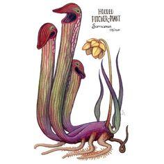 Hooded Pitcher Plant Sprite, an art print by Emma Lazauski : Fantasy Monster, Monster Art, Plant Monster, Mythical Creatures Art, Magical Creatures, Creature Concept Art, Creature Design, Fantasy Beasts, Fantasy Art