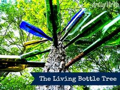 Artsy VaVa: The Living Bottle Tree