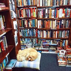 Commonwealth Books in Boston, MA | 31 Independent Bookstores That Are Every Book Lover's Dream