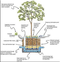 Raingarden by sustainablewatermgt.com #Raingarden #Water_Management #sustainablewatermgt_com