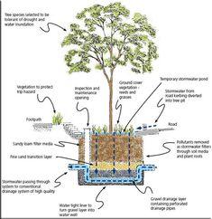 rain garden | Rain Garden Diagrams