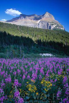 Logan Pass area, Glacier National Park, Montana