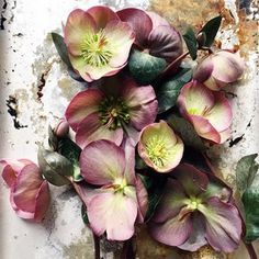 #hellebores #floralphotography