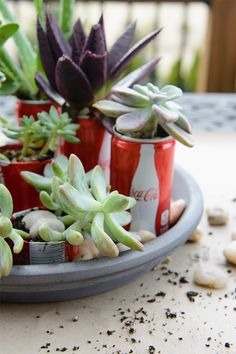 Our partner Melissa shows us a beautiful DIY succulent garden made with Coke mini cans. It's the perfect centerpiece for your next backyard barbecue.