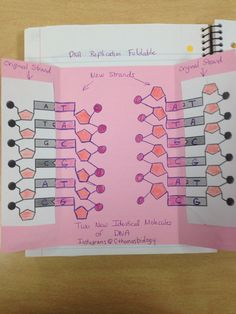 DNA Replication Foldable Inside ends are not correct) Biology Classroom, Biology Teacher, Science Biology, Teaching Biology, Life Science, Ap Biology, Forensic Science, Computer Science, Earth Science