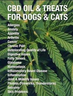 hemp oil for pain relief for dogs - cbd oil for dogs / hemp oil for dogs Cannabis Plant, Cannabis Edibles, Endocannabinoid System, Oils For Dogs, Salud Natural, Cbd Hemp Oil, Stress, Ancient Aliens, Fibromyalgia