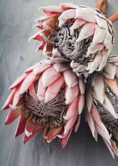 Protea Flower Art Prints Decor Styling Interior Design Pink Blush Home Bedroom Family Positivity Inspiration Monochrome Colour Plants Living Room Interior Frame Live Artwork Protea Art, Protea Flower, Flower Power, King Protea, Australian Native Flowers, 3d Rose, Dried Flowers, Flower Art, Flower Arrangements