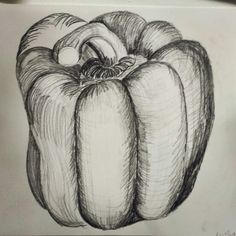 Still life pencil drawing of a pepper. Focusing on hatching.