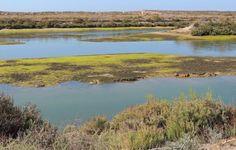Parque Natural da Ria Formosa - Olhão - Algarve