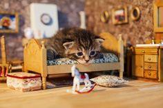 Kitten relaxes on dollhouse furniture.