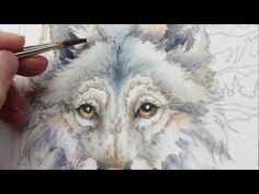 How to paint a wolf using water color paint, to find print of this image visit (http://www.bergsma.com/eyes-of-the-wild-prints-c-3-p-1-pr-4391.html) or buy an art kit to follow along in the video (http://www.bergsma.com/special-bergsma-beginning-art-set-c-399-p-1-pr-4517.html)  For more techniques on how to paint go to (http://www.bergsma.tv/)  ...